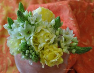 ornies and tulips