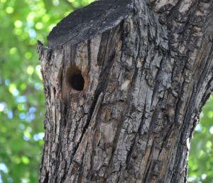 tree wp1 C