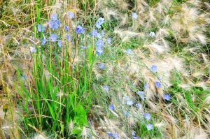 flax aug 17 2016