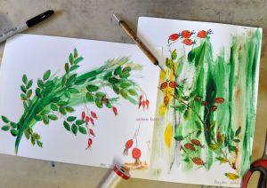 rosehips sketch b