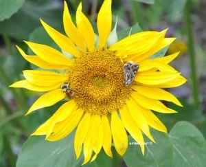 sunflower rest stop