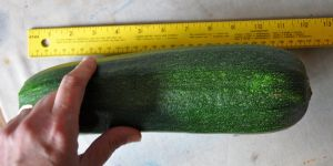 zucchinni