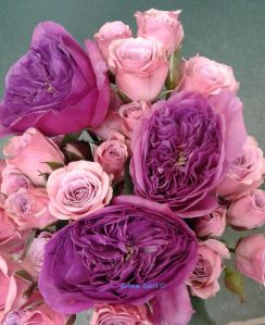 the-beauty-of-old-roses-c