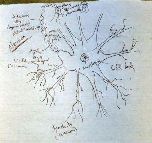 neuron-sketch